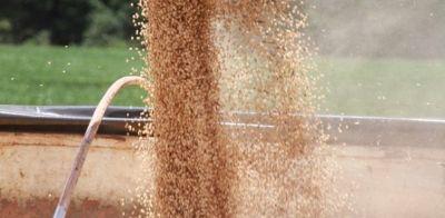 Mato Grosso registra queda de 4% no volume de soja esmagada em abril