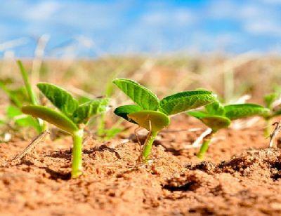 Fertilizantes para soja atingem os preços mais altos em 9 anos
