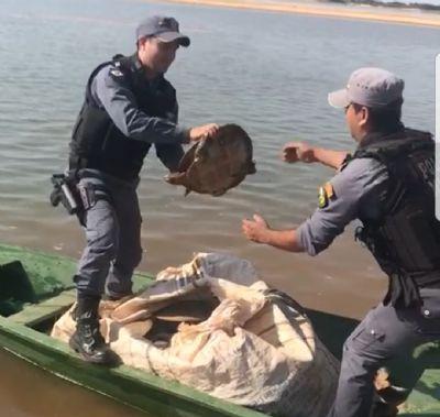 PM flagra transporte de tartarugas em embarcação em São Félix do Araguaia - vídeo