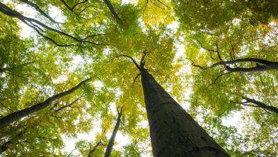 Valor da produção primária florestal cresce para R$ 20,6 bi em 2018, diz IBGE