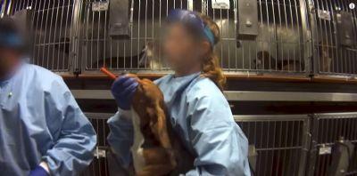 Multinacional decide libertar cães usados em testes de agrotóxicos exigidos pela Anvisa