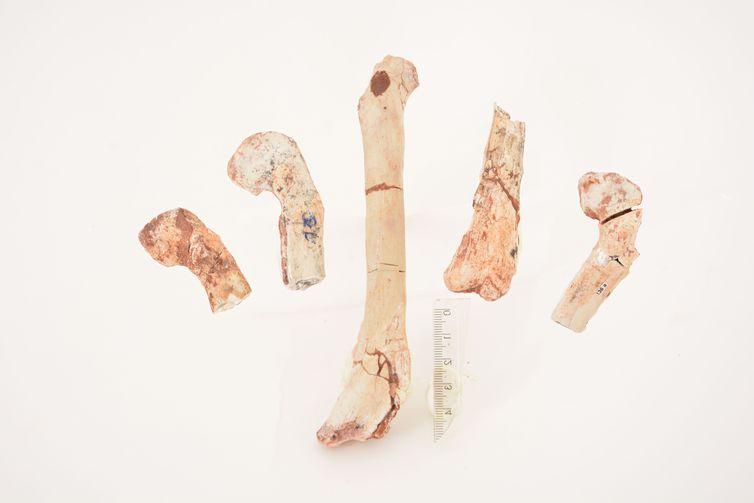 Fêmur do dinossauro - Crédito Geovane Souza - 16.01.2017/Geovane Souza/Museu N